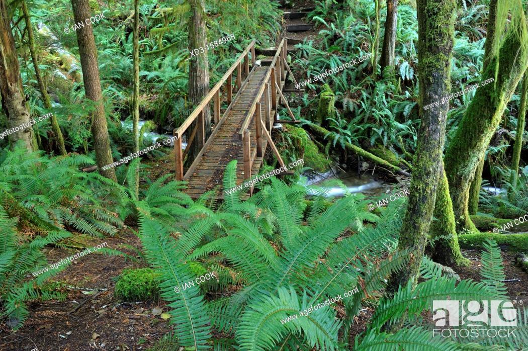 Stock Photo: footbridge on Surge Narrows Trail, Quadra Island, British Columbia, Canada.