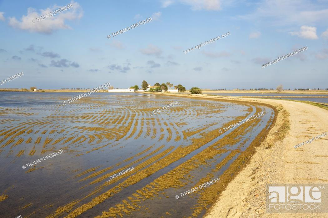 Stock Photo: Country lane amidst flooded rice fields leading to a farmstead. Environs of the Ebro Delta Nature Reserve, Tarragona province, Catalonia, Spain.