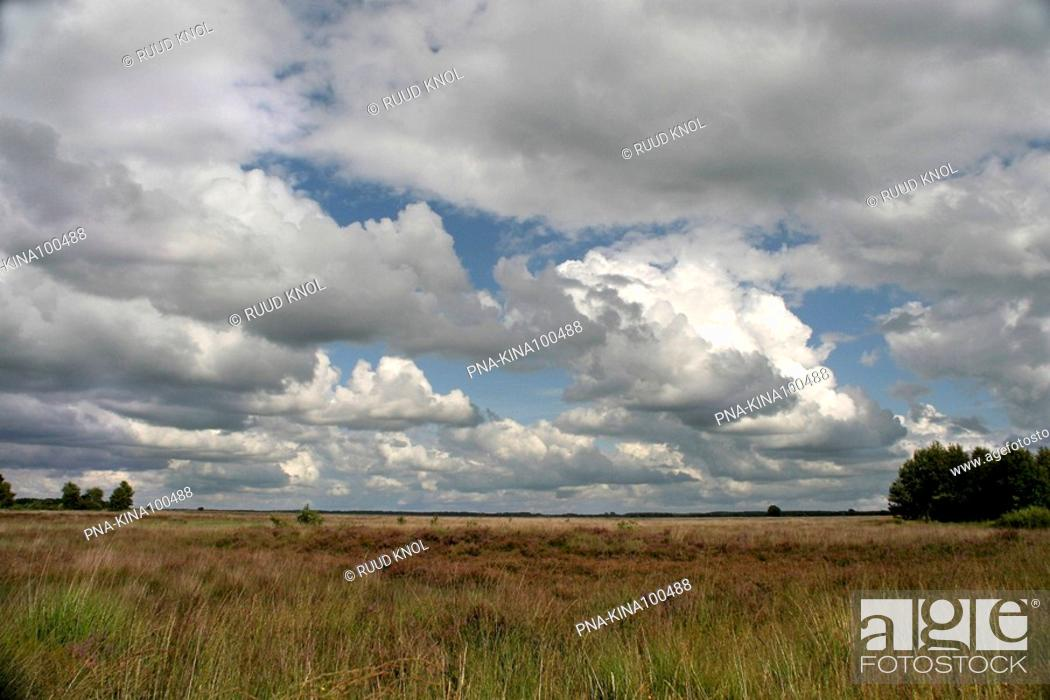 Stock Photo: National Park Dwingelderveld, Dwingelose Heide, Dwingeloo, Drenthe, The Netherlands, Holland, Europe.