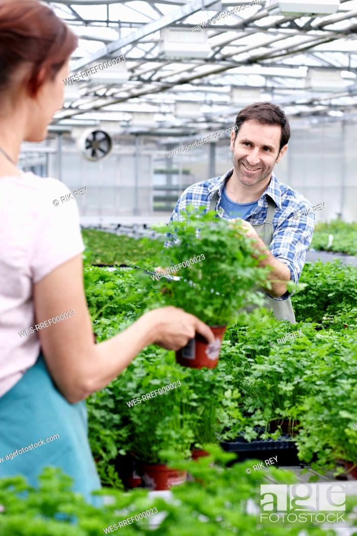 Stock Photo: Germany, Bavaria, Munich, Mature man and woman in greenhouse between parsley plants.