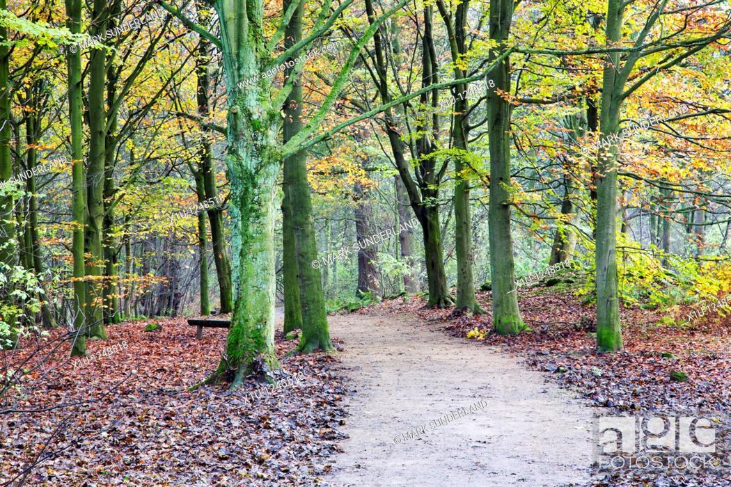 Stock Photo: Middleton Woods in Autumn Ilkley Yorkshire England.