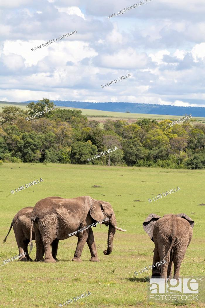 Imagen: elephant in masai mara national park.