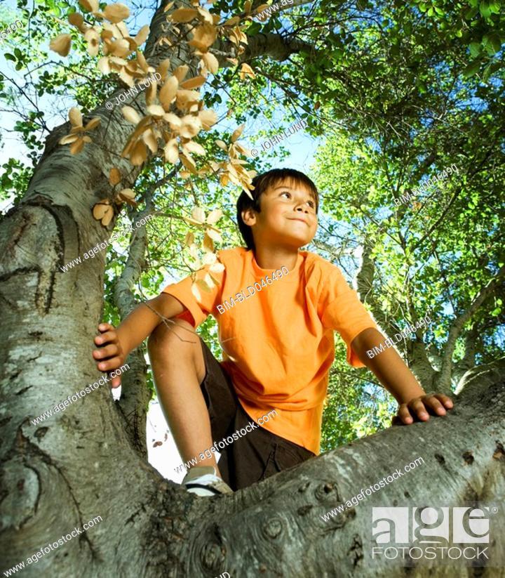 Stock Photo: Hispanic boy climbing tree.