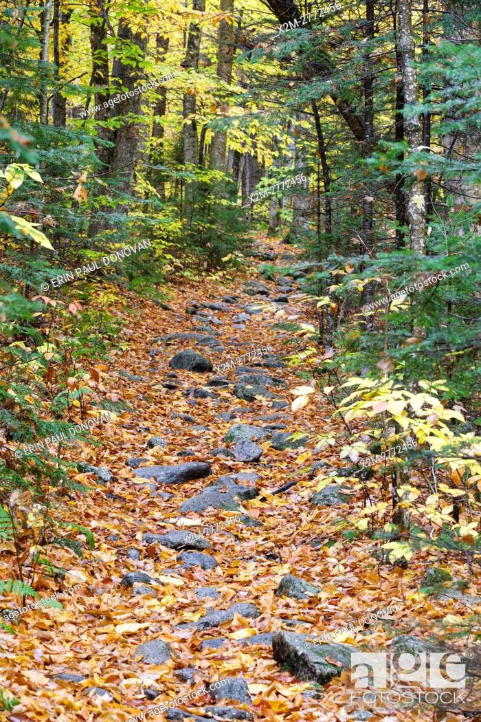 Stock Photo: Leaf drop along the Mt. Tecumseh Trail in Waterville Valley, New Hampshire during the autumn months.