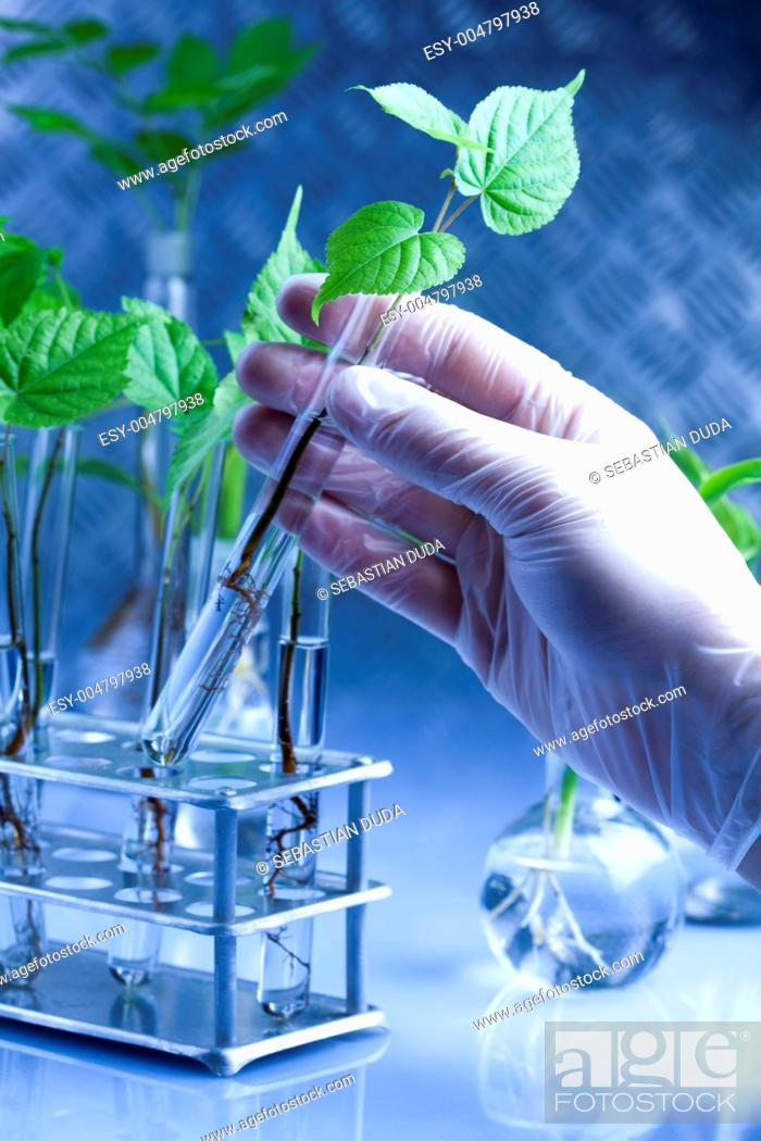 Stock Photo: Plant growing in test tubes in a laboratory.