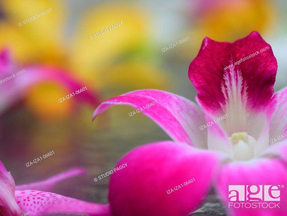 Imagen: Close-up of flowers.