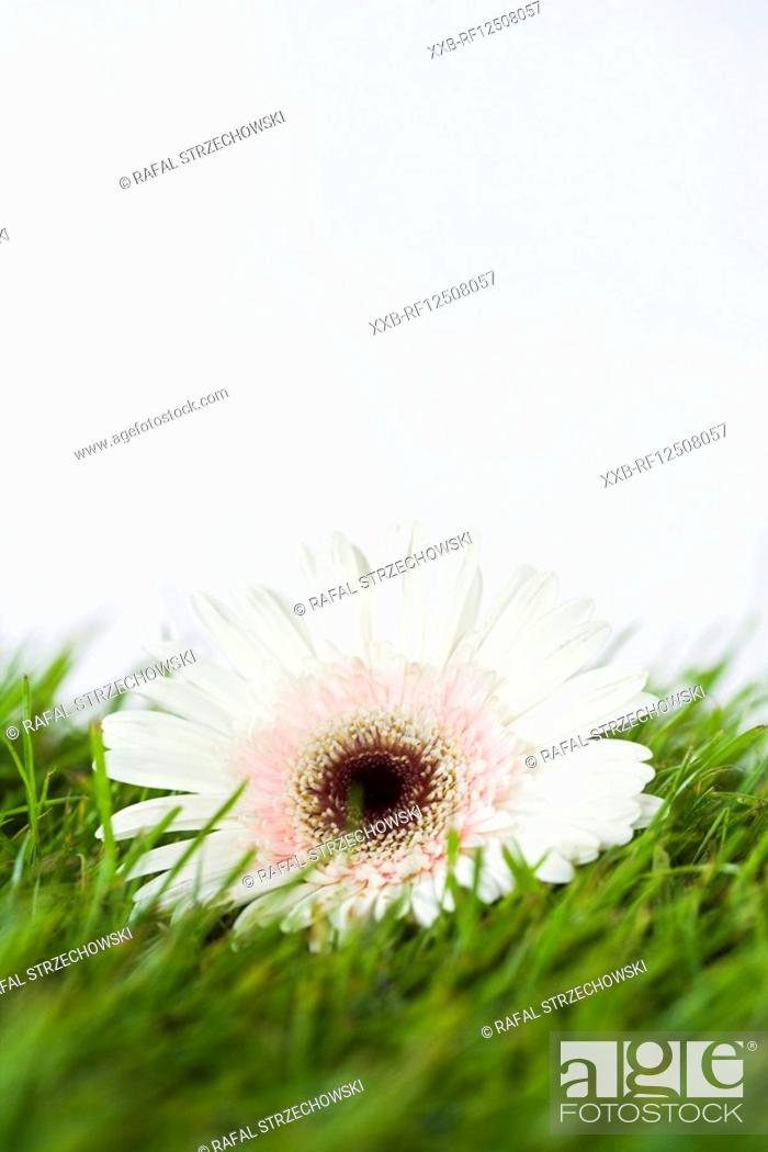Stock Photo: closeup of flower.