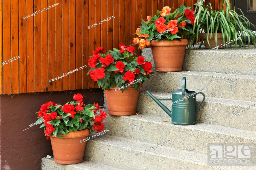 Stock Photo: Staircase with potted begonias and watering can.