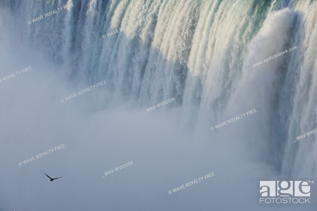 Stock Photo: Close-up of Horseshoe Falls with Gull flying - Niagara Falls - Ontario Canada.