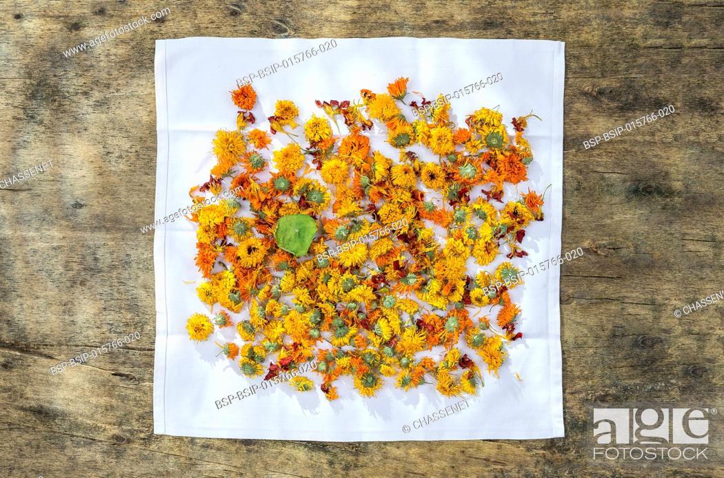 Stock Photo: Dried organic herbal healing calendula on napkin over wooden table.
