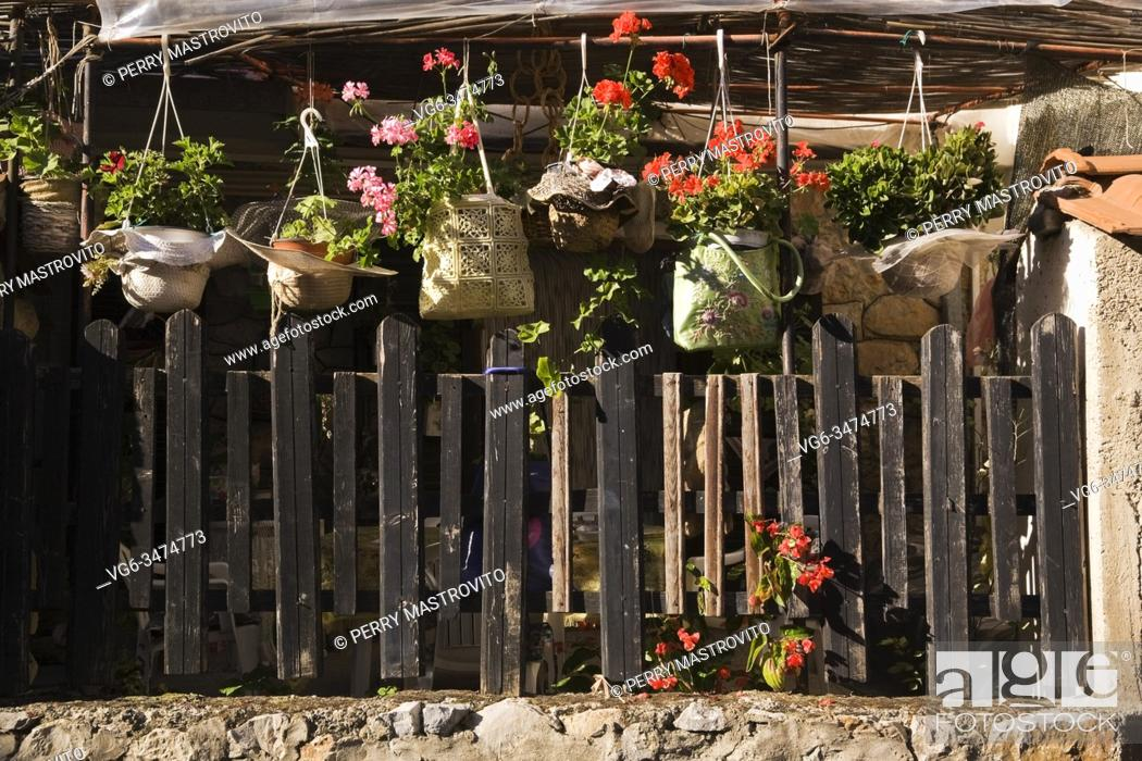 Stock Photo: Pink and red Pelargonium - Geranium flowers in hanging baskets covered with hand bags over old wooden picket fence in backyard garden in early autumn.