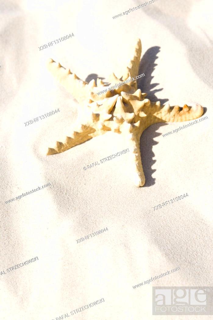 Stock Photo: starfish on sand.
