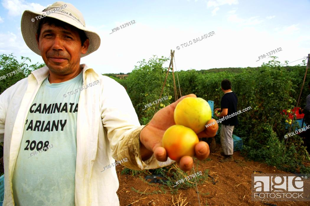 Stock Photo: Immigrant farmers Ariany Es Pla Mallorca Illes Balears Spain.