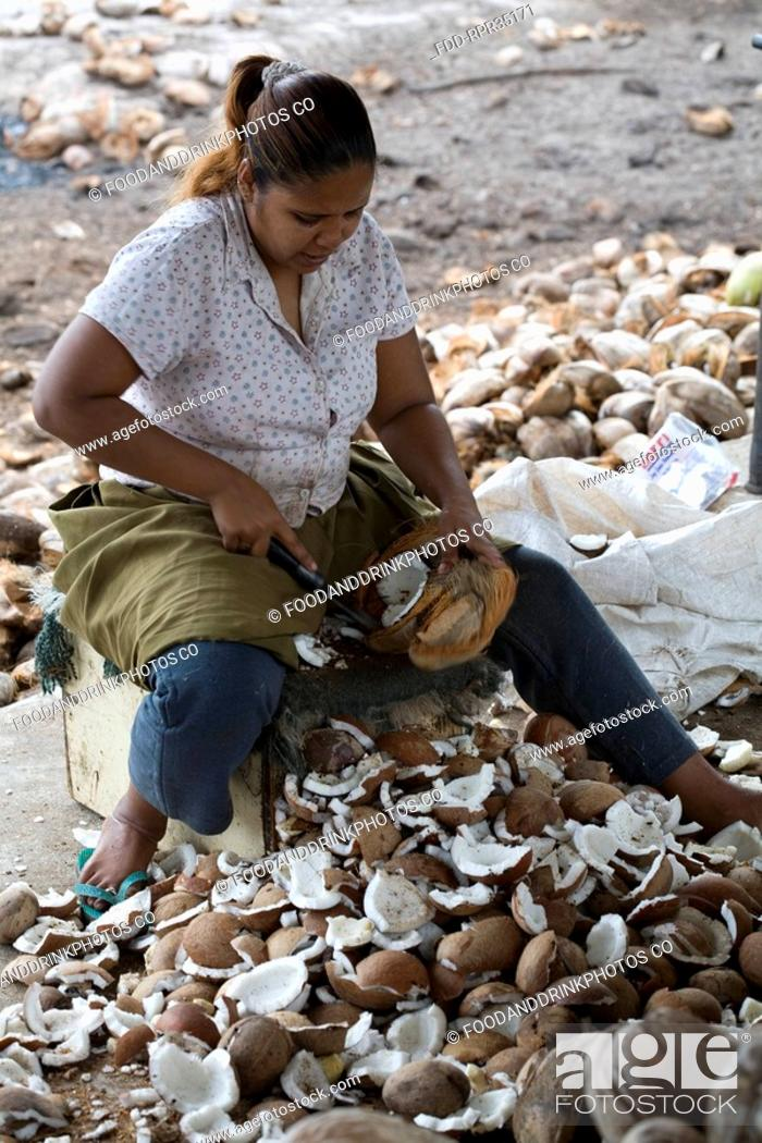 Stock Photo: Cutting Coconut Copra for Oil Production, South Trinidad.