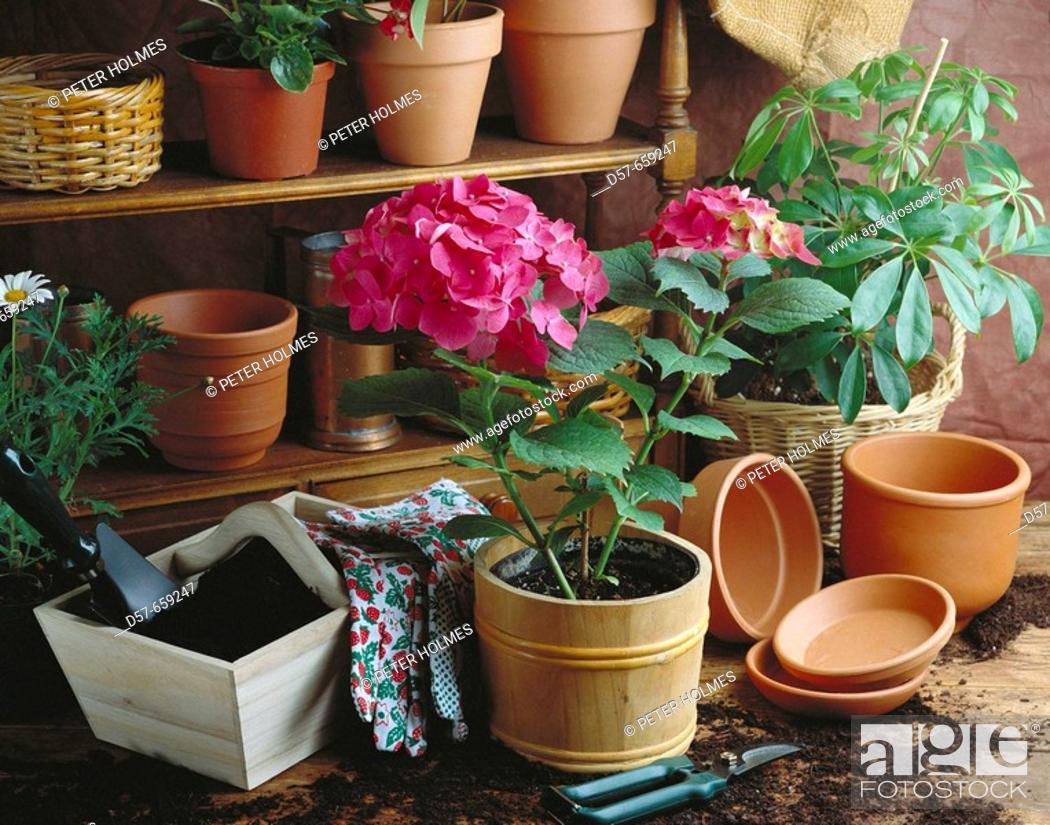 Stock Photo: Flowers, gardening.