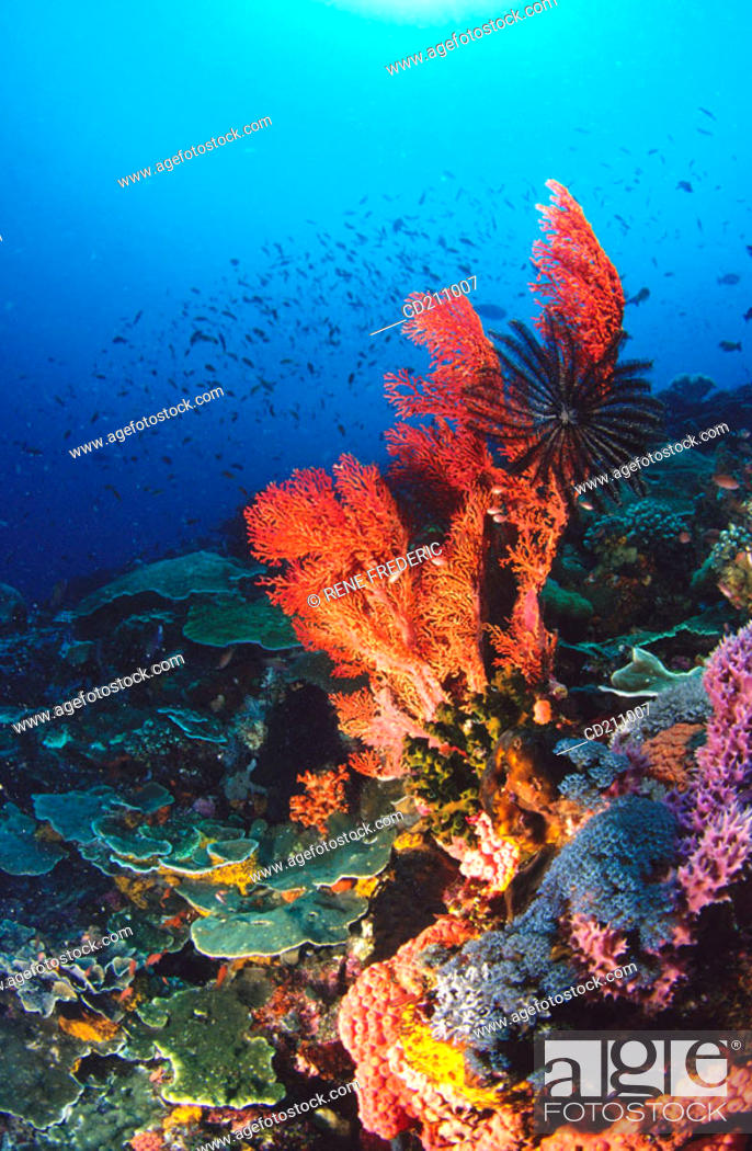 Stock Photo: Reef structure. Komodo National Park. Indonesia.