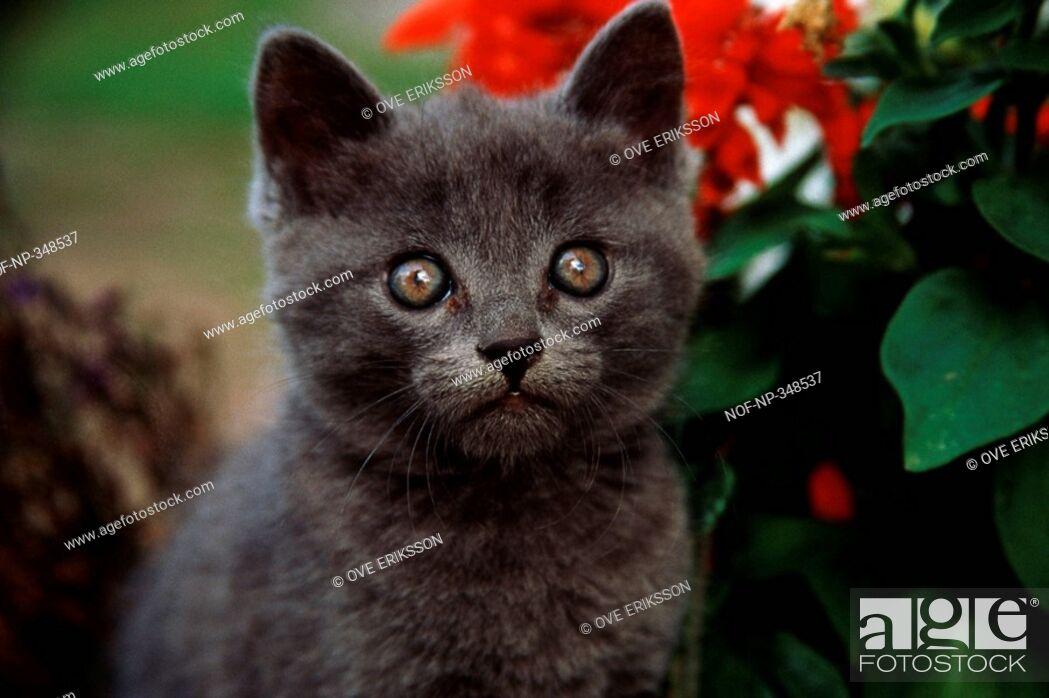 Stock Photo: A startled kitten.