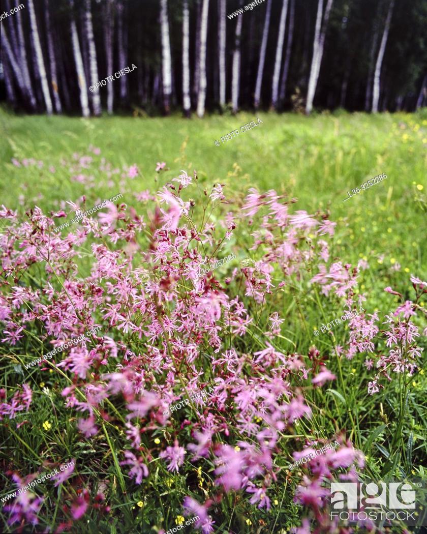 Stock Photo: Spring meadow. Poland.