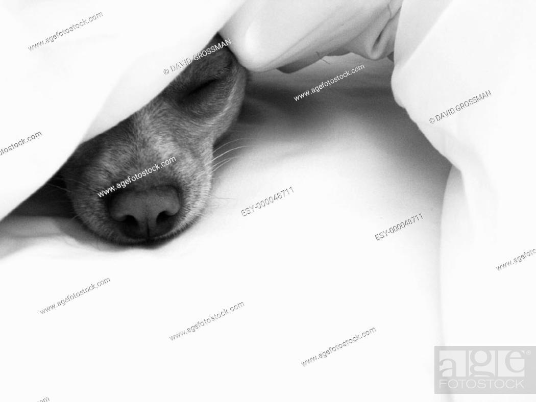 Imagen: Dog.