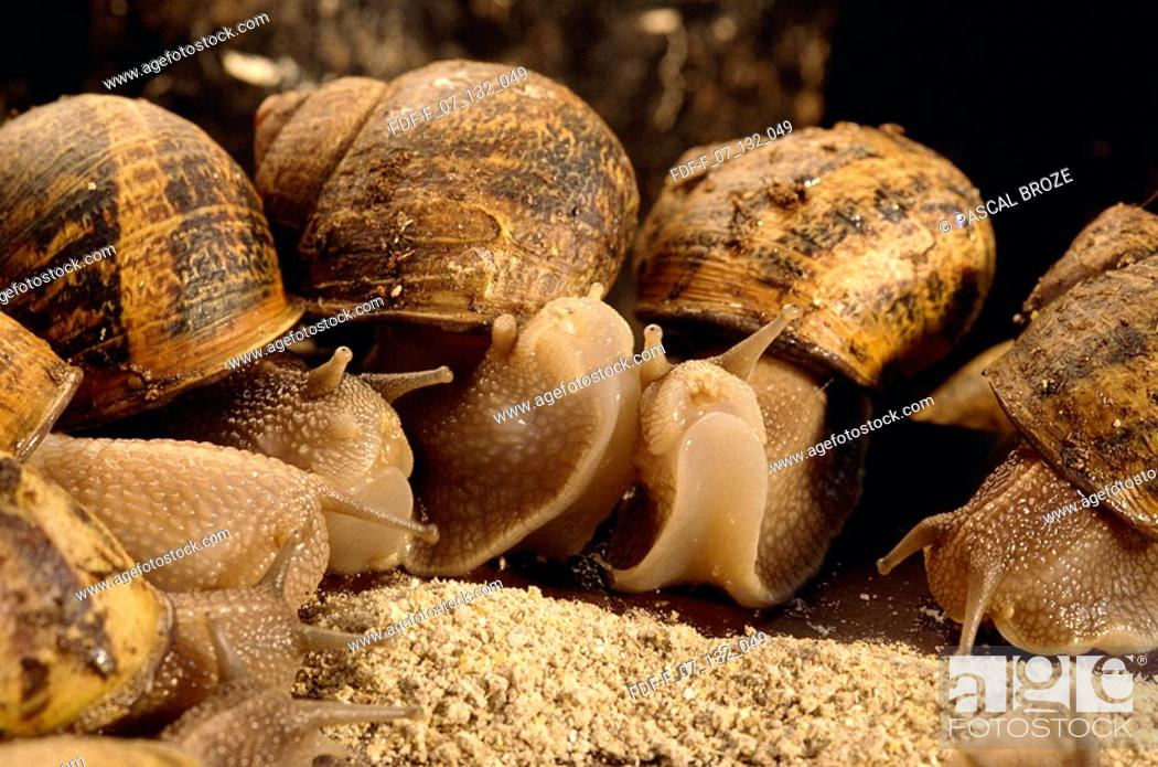 Stock Photo: Close-up of snails eating.