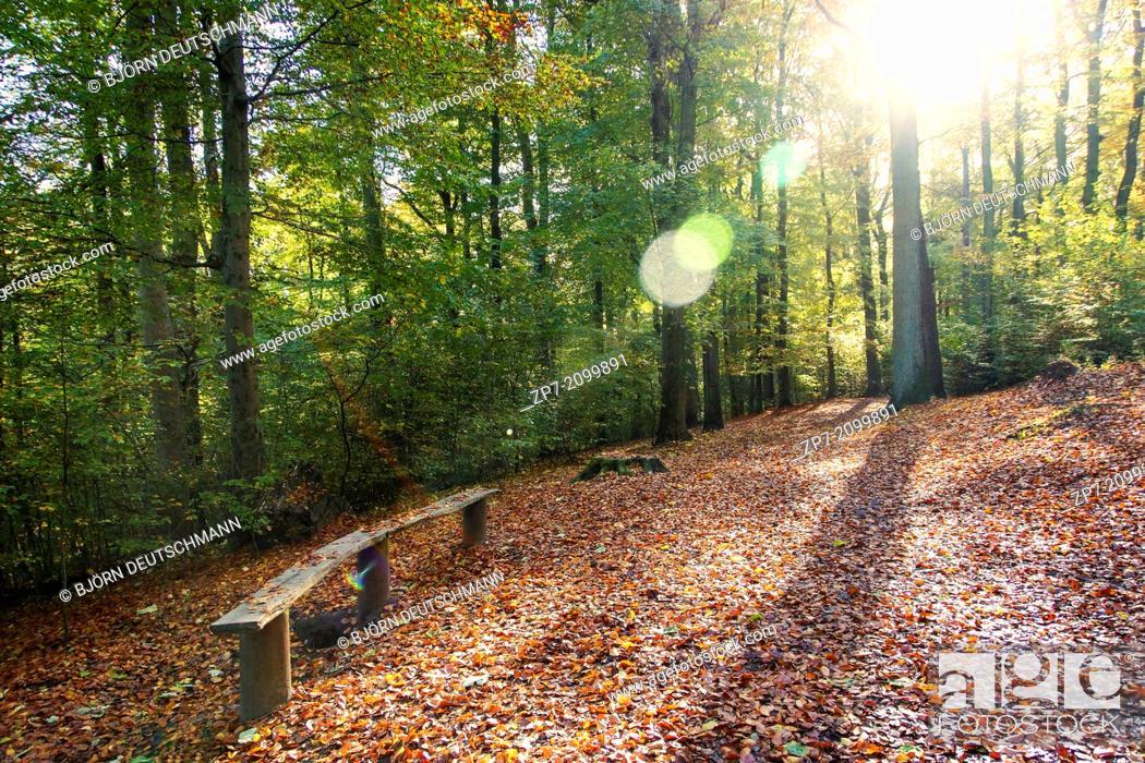 Stock Photo: An autumn landscape in a forest in Kiel.