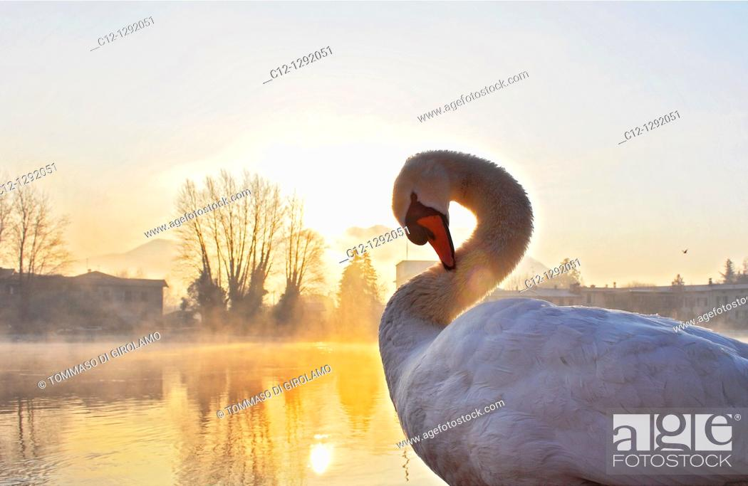 Stock Photo: Winter Sunrice, Swin.