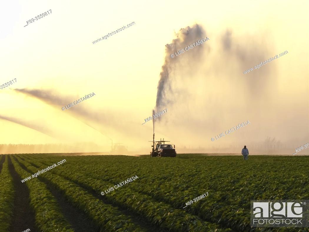 Stock Photo: Sprinkling Crops. Florida. USA.