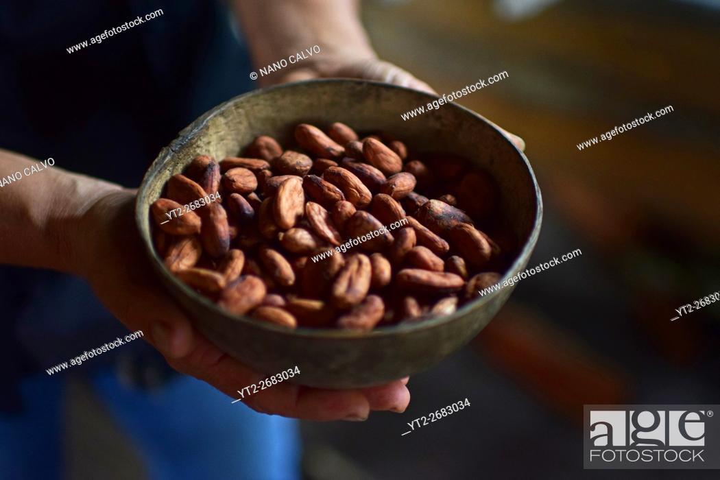 Stock Photo: Preparing natural cacao drink at Bribri tribe house.