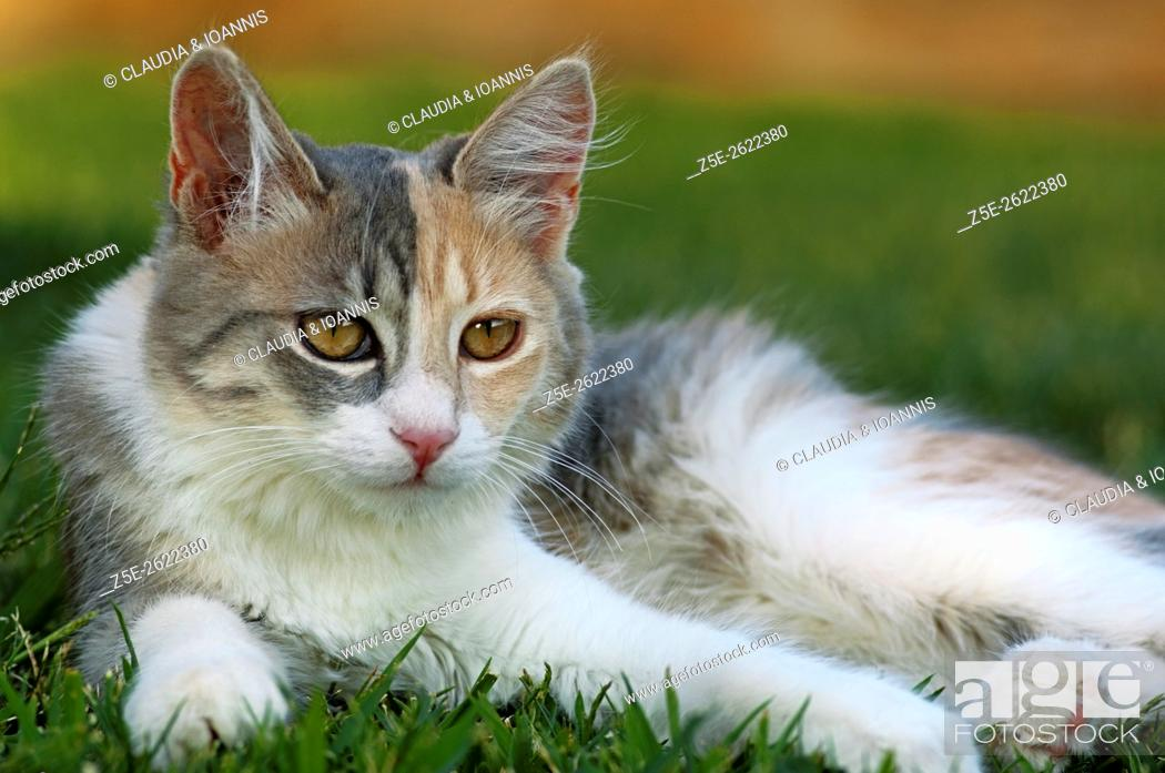 Stock Photo: Young calico cat resting in the garden.