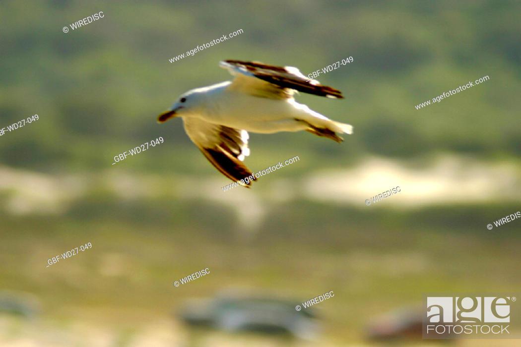 Stock Photo: Beaches, bird, nature, coast line, Brazil.