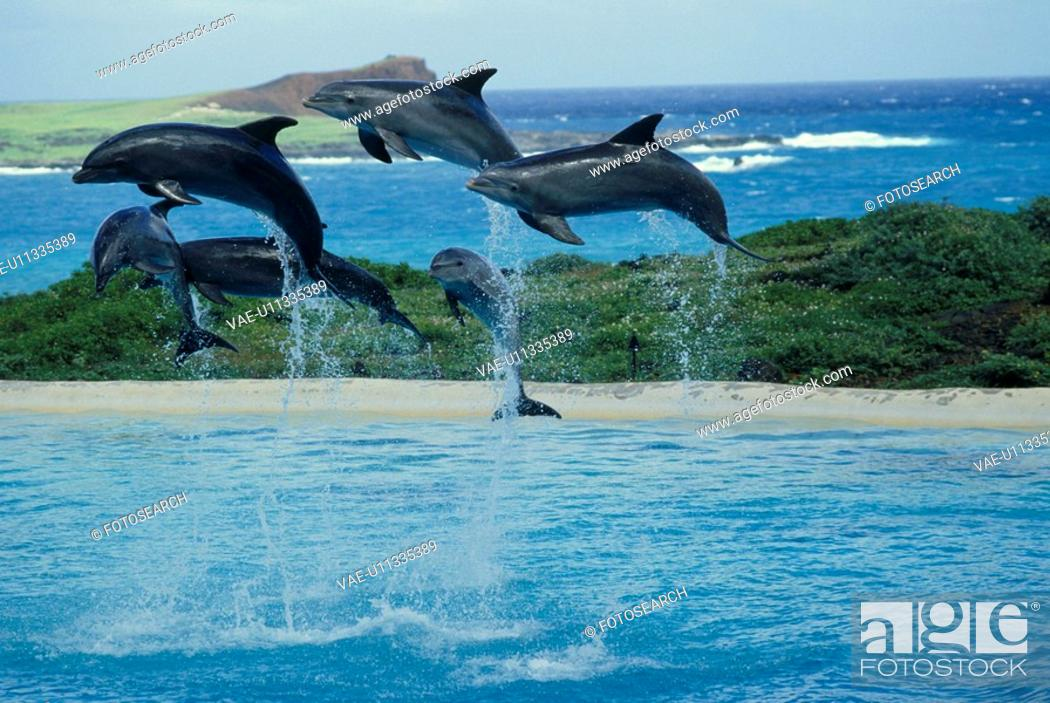 Stock Photo: The Jump Of A Dolphin.