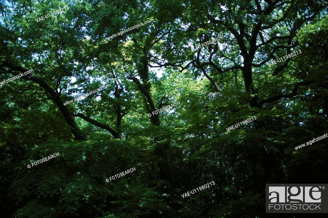 Stock Photo: Dense Woodlands.