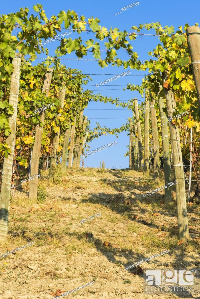 Stock Photo: Barolo, Cuneo Province, Piedmont, Italy.