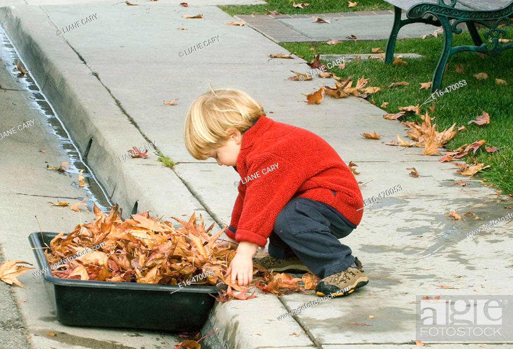 Imagen: Boy collecting leaves.