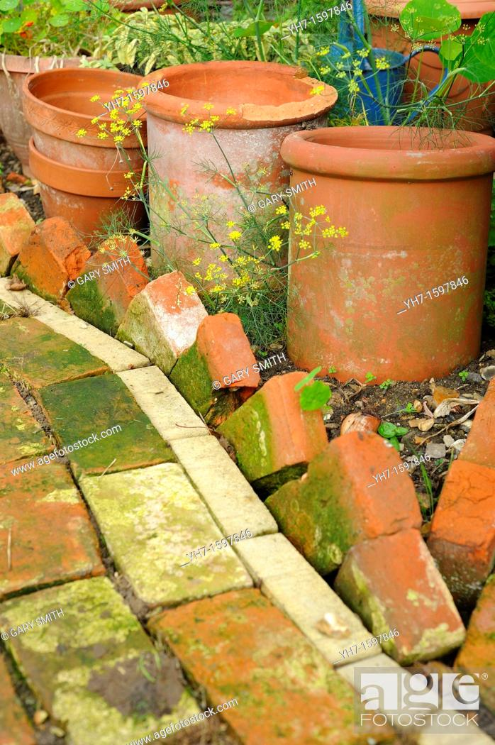 Stock Photo: Reclaimed brick pathway and edging with terracotta pots and fennel, UK, November.