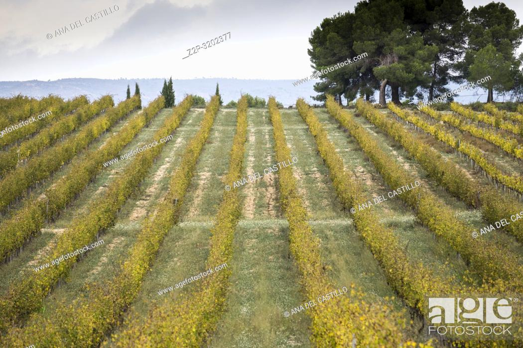 Stock Photo: Autumn Vineyards and cellars in Fontanars dels Alforins and Moixent Valencia province, Spain.