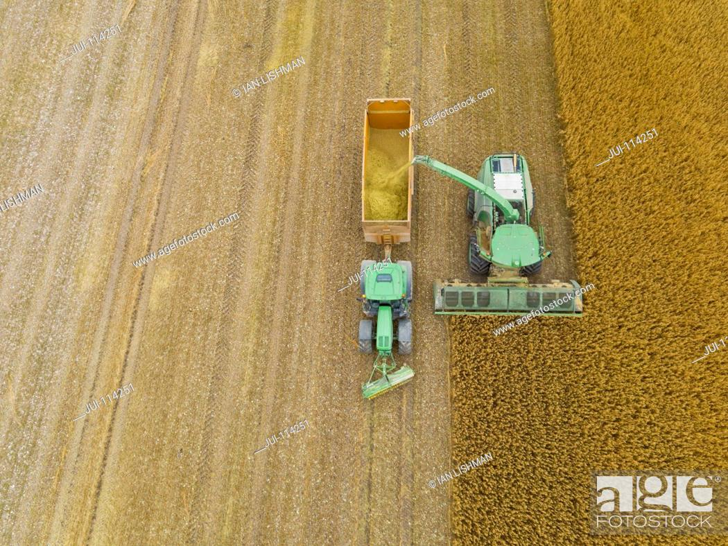 Stock Photo: Aerial Shot Of Forage Harvesting Oats And Filling Trailer.