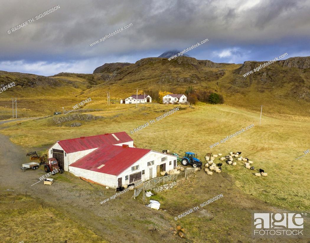 Photo de stock: Sheep farm, Nordurardalur valley, Borgarfjordur, Western Iceland.