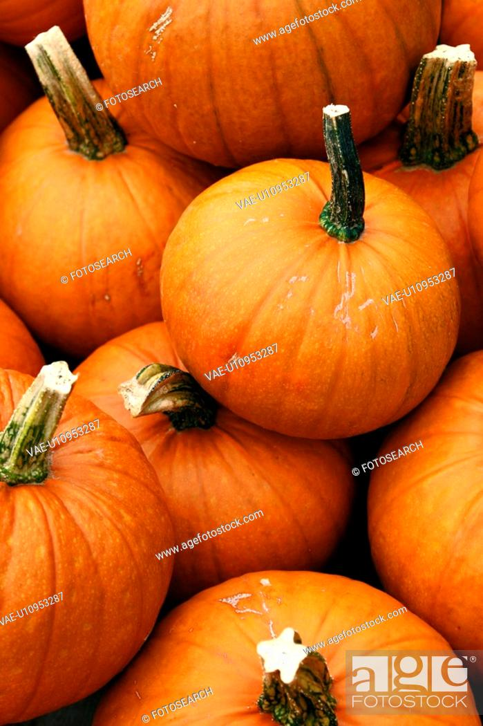 Photo de stock: CLOSE, cucurbita, close-up, alfred.
