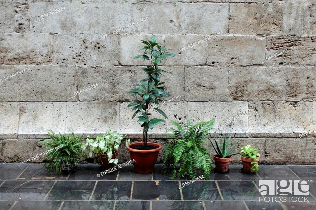 Stock Photo: flowerpotsin a wall, Lonja de la Seda (Silk Exchange). Late gothic, 15th Century. Valencia. Spain.