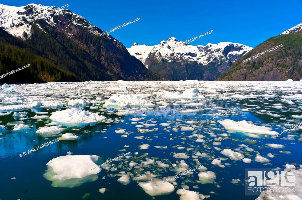 Photo de stock: Icebergs and ice floes, LeConte Bay near LeConte Glacier, between Petersburg and Wrangell, southeast Alaska USA.