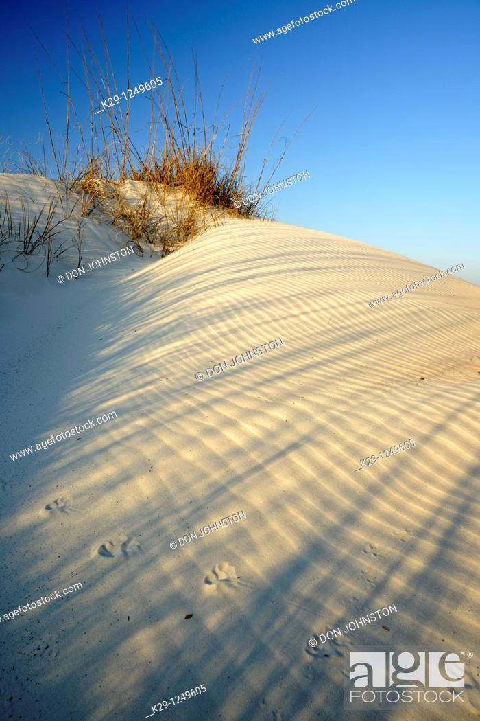 Stock Photo: Dune grasses and shadows.