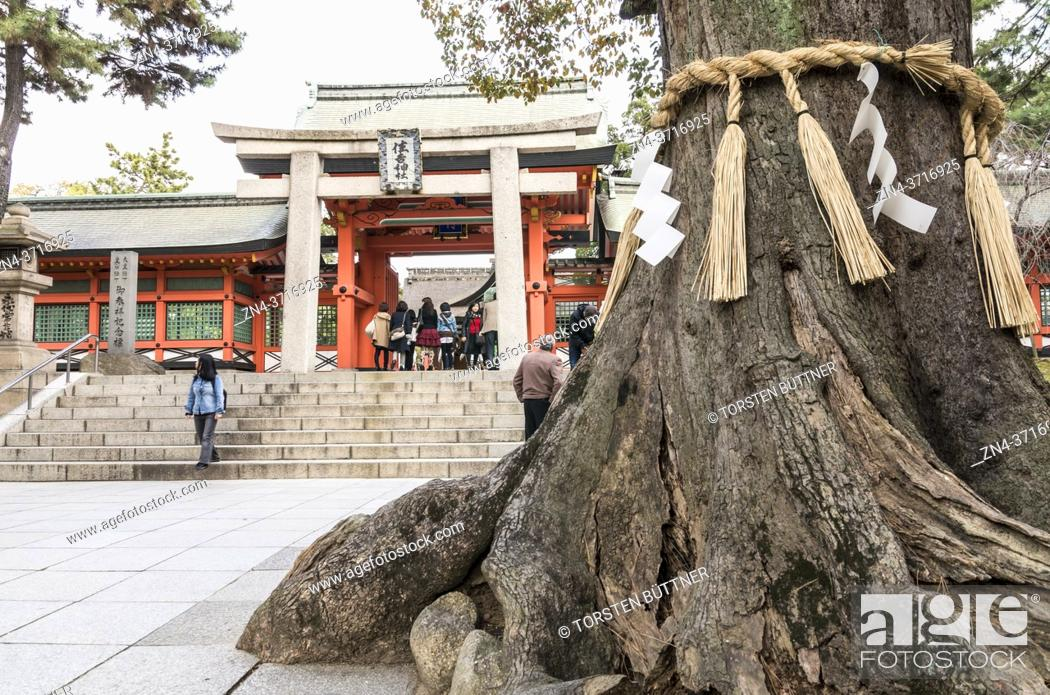 Stock Photo: Shimenawa rope around sacred tree in front of Sumiyoshi-taisha shrine, Osaka, Japan.