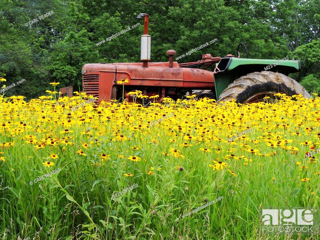 Imagen: An old tractor comes to rest in a field of flowers, Pennsylvania, USA.