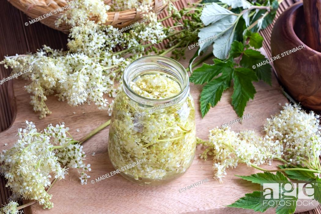 Stock Photo: A jar filled with meadowsweet blossoms and alcohol, to prepare homemade tincture.