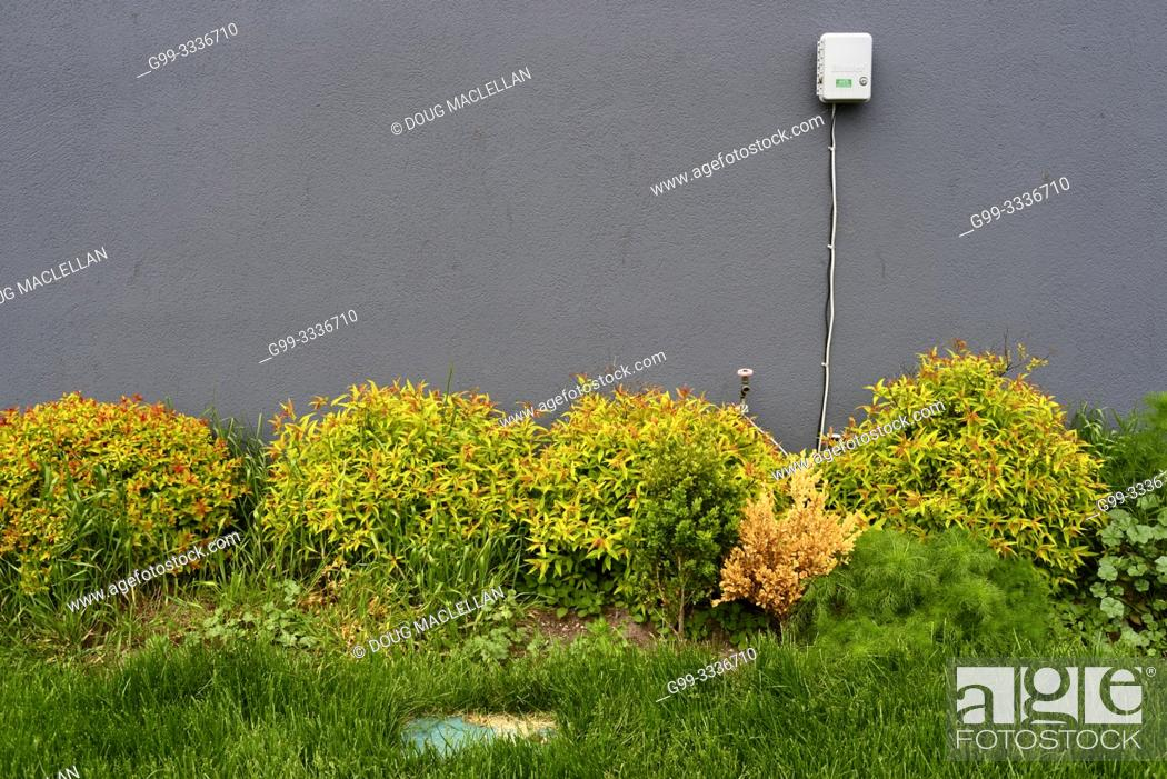Stock Photo: A power junction box on a dark grey side of a building behind yellowish bushes, green grass, and a mlticoloured box, Toronto, Ontario, Canada.