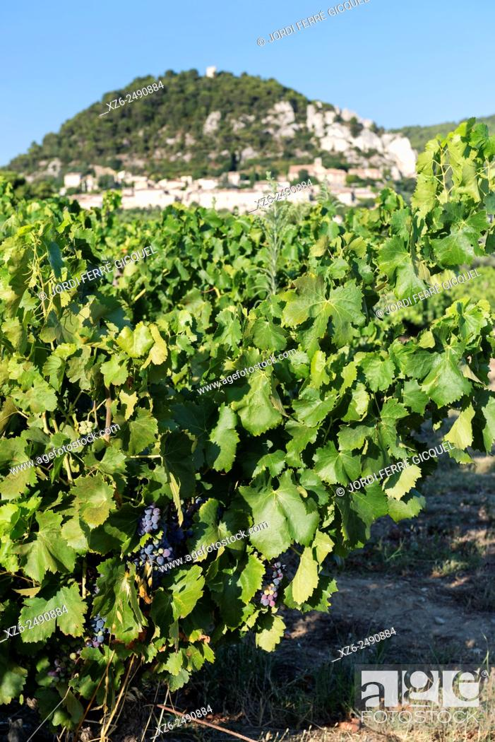 Stock Photo: Vineyards in the wine producing region Côtes du Rhône Villages AOC, Séguret, Vaucluse, 84, Provence-Alpes-Côte d'Azur, France, Europe.