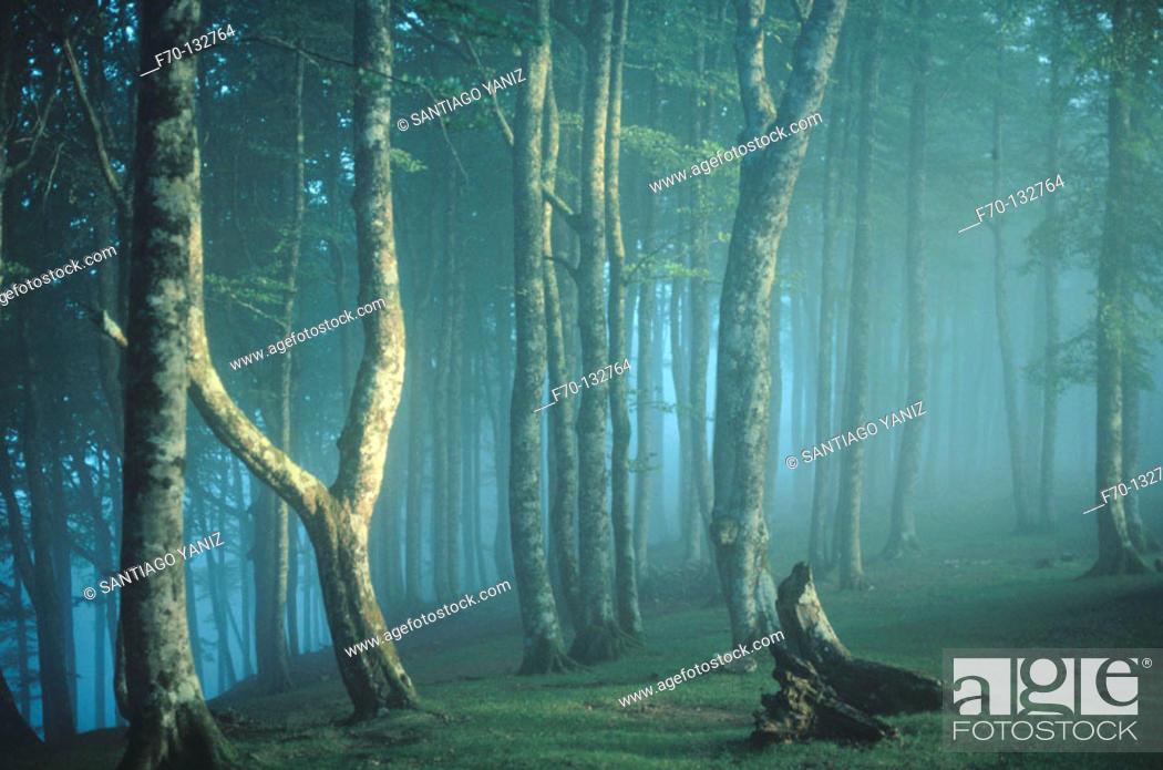 Stock Photo: Irati forest. Navarre. Spain.