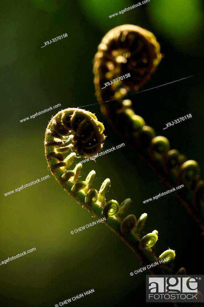 Stock Photo: Common Polypody Fern in nature.