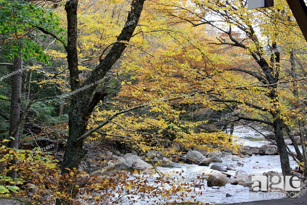 Stock Photo: Flowing mountain stream nestled in a forest with fall foliage at the Flume Gorge in Franconia Notch State Park, in Lincoln, New Hampshire, USA.